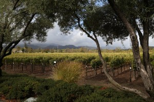 darioush-winery (3)