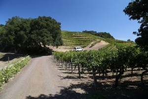 marston-family-vineyards (3)