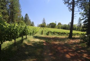 red-cap-vineyards-howell-mountain