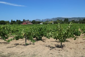 Mike-Molly-Hendry-Vineyard (1)