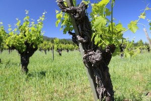 Mending-Wall-Winery (27)
