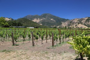 Valley-Floor-Vineyard-Calistoga (2)
