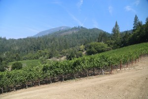 Knighton-Family-Vineyard (1)