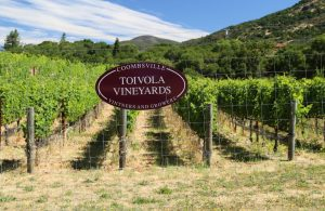 Toivola-Vineyards-Coombsville