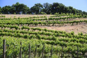 Amizetta-Estate-Winery (2)