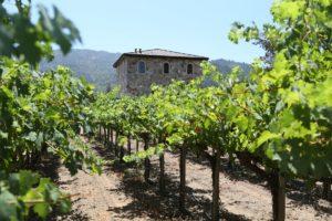 Anomaly-Winery (3)