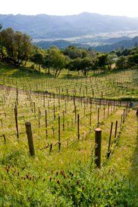 Arkenstone-Vineyards