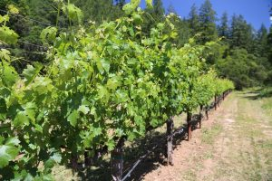 Arns-Winery-Napa-Vineyards (5)