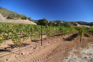 Buehler-Vineyards (11)