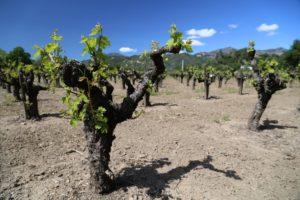 Canard-Winery-Calistoga (1)