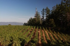 Chateau-Potelle-Vineyards1