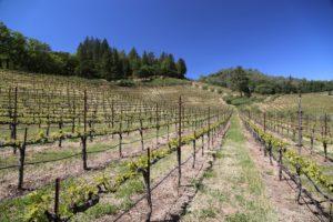 Cimarossa-Vineyard (2)