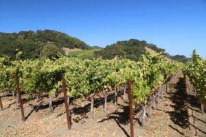 Darms-Lane-Winery (2)