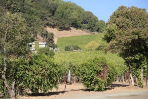 Darms-Lane-Winery (3)