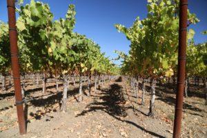 Darms-Lane-Winery (4)