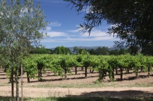 Detert-Family-Vineyards
