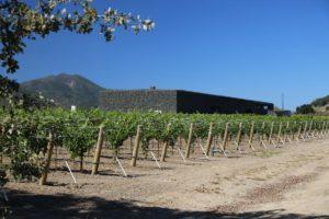 Dominus-Winery