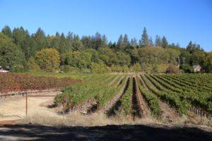 Dunn-Vineyards (3)