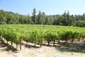 Dyer-Vineyard (2)