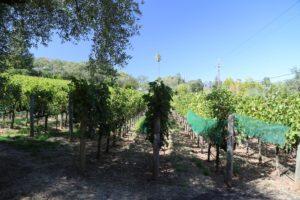 Grace-Family-Vineyards (1)