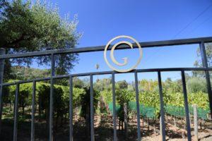 Grace-Family-Vineyards (2)