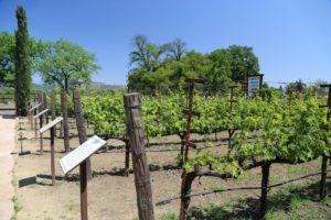Grgich-Hills-Winery-Napa (17)