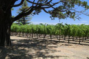 Hayfork-Winery (2)