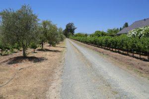 Jaffe-Estate-Vineyards (1)