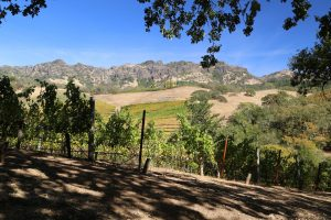 Jericho-Canyon-Vineyards (3)