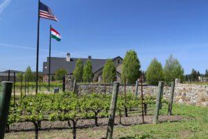 Kapcsandy-Winery (1)