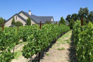 Kapscandy-Winery-Napa-Valley (1)