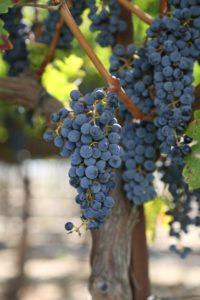 Lamborn-Family-Vineyards (3)