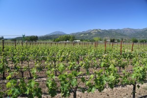 Madrigal-Vineyards-Winery-Napa (1)