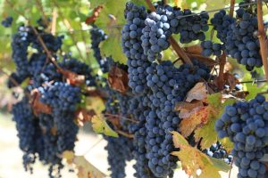 Napa-Valley-College-Estate-Winery (1)