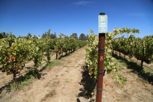 Napa-Valley-College-Estate-Winery (2)