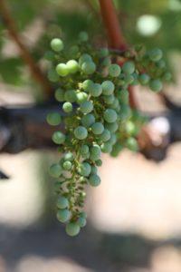 Palmaz-Vineyards (27)
