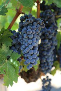 Revana-Vineyards-Napa (13)