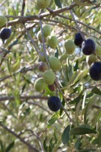 Revana-Vineyards-Napa (19)