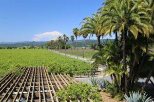 Round-Pond-Estate-Winery (10)