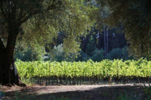 Sabina-Vineyards (1)