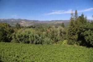 Sabina-Vineyards (6)