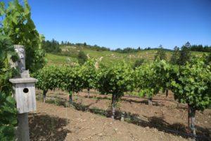 Schweiger-Vineyards (1)