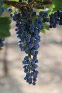 Seven-Stones-Winery-Cabernet-Sauvignon