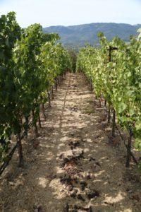 Seven-Stones-Winery-Napa (10)