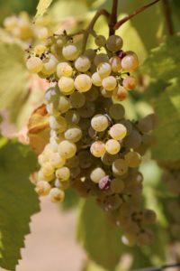 Stony-Hill-Vineyards (5)