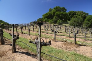 Taylor-Family-Vineyards (2)