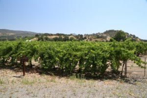 Teaderman-Vineyards (1)