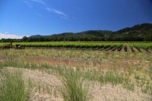 Titus-Vineyards (5)