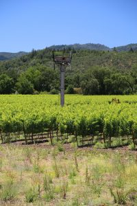 Titus-Vineyards (8)