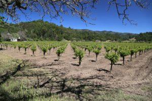 Tofanelli-Vineyard-Calistoga (2)